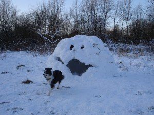 Dog isn't sure about this slightly spooky face-igloo...